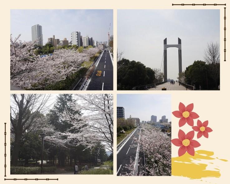 清澄白河-木場公園 賞櫻