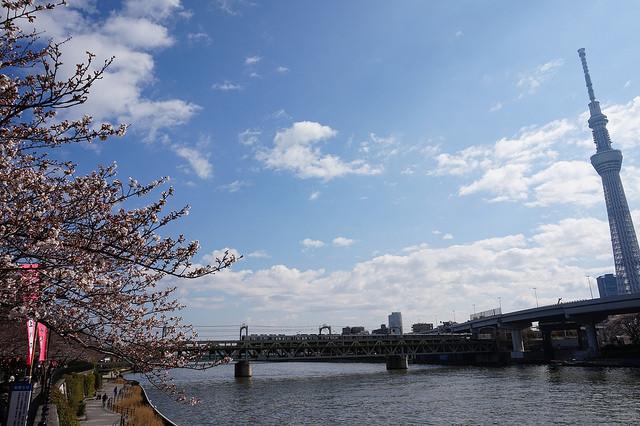 【東京賞櫻一日行程】地鐵淺草站與駒込站賞櫻巡禮(上回)