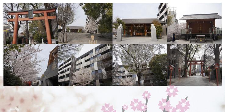 神樂坂 赤城神社